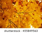 bright autumn leaves in the... | Shutterstock . vector #455849563