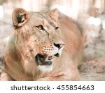 portrait the animal african... | Shutterstock . vector #455854663