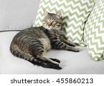 Cute Cat On Grey Couch