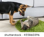 Stock photo cute cat and funny dog playing on carpet 455860396