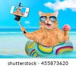cat wearing sunglasses relaxing ... | Shutterstock . vector #455873620