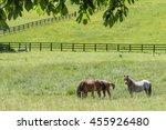 Horses Graze In A Grassy Field...