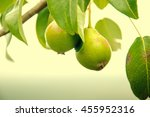 Green Pears With Leafs On The...