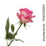pink rose flower isolated on... | Shutterstock . vector #456035854