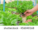 farmer collect green hydroponic ... | Shutterstock . vector #456040168