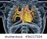 human heart. 3d illustration. | Shutterstock . vector #456117334