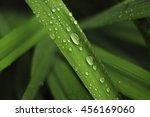drops of dew on a green grass | Shutterstock . vector #456169060