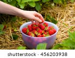 man picking fresh strawberries... | Shutterstock . vector #456203938