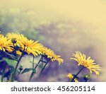 beautifu yellowl chamomiles... | Shutterstock . vector #456205114