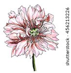 white pale pink peony flower... | Shutterstock . vector #456213226