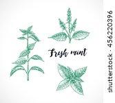 mint hand drawn vector  set.... | Shutterstock .eps vector #456220396