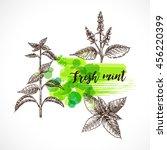 mint hand drawn vector  set....   Shutterstock .eps vector #456220399