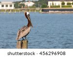 Brown Pelican On A Post At The...