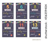 Pregnancy 5 13 Weeks Vector...