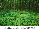 the wild bushy thickets of... | Shutterstock . vector #456381730