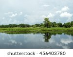 lush green swamp in louisiana ... | Shutterstock . vector #456403780