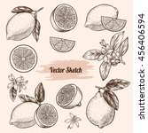 vector lemons hand drawn sketch.... | Shutterstock .eps vector #456406594