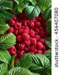 Ripe Red Raspberries And Green...
