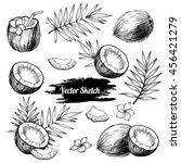 Vector Coconut Hand Drawn...