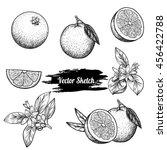 vector oranges hand drawn... | Shutterstock .eps vector #456422788