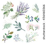 herbs and plants for herbal... | Shutterstock .eps vector #456460366