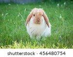 Little Rabbit On Green Grass I...