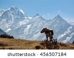 Small photo of A standing cow with high mountain and blue sky on the acclimatization route at Namche Bazaar in everest region of Nepal.