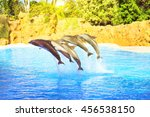 Dolphins Show In The Pool ...