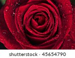 Beautiful Red Rose With Rain...