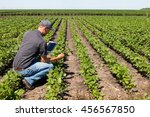 Small photo of Agronomist Using a Tablet in an Agriculture Field