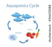 illustration of aquaponics... | Shutterstock .eps vector #456633088