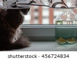 Cat Watching The Fish