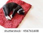 Cat Sleeping On Red Carpet ...