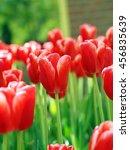 flowers at keukenhof garden | Shutterstock . vector #456835639
