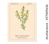 dyer's greenweed or dyer's... | Shutterstock .eps vector #457009636