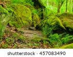 Ferns Grow Around Moss Covered...