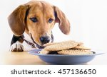 beagle eating sweet cookies on... | Shutterstock . vector #457136650