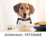 beagle puppy and sweet cookies... | Shutterstock . vector #457136668