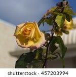 fragrant romantic beautiful... | Shutterstock . vector #457203994