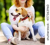 Stock photo young beautiful woman playing with beagle dog in the summer park 457363960