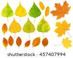 set   autumn leafs of a birch ... | Shutterstock . vector #457407994