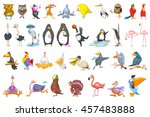 Set Of Various Colourful Birds...