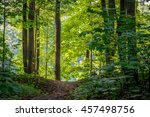 bright green forest natural... | Shutterstock . vector #457498756