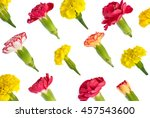 isolated bright meadow flowers... | Shutterstock . vector #457543600