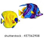 colorful tropical reef fish  ... | Shutterstock . vector #457562908