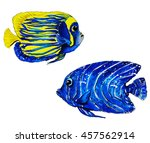 Colorful Tropical Reef Fish  ...