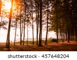 Sea Or Beach With Pine Tree In...