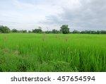 Grass Flowers Beside Green Ric...