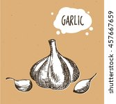 garlic in engraving vintage... | Shutterstock .eps vector #457667659