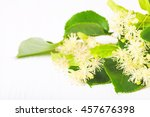 flowers and leaves of linden... | Shutterstock . vector #457676398